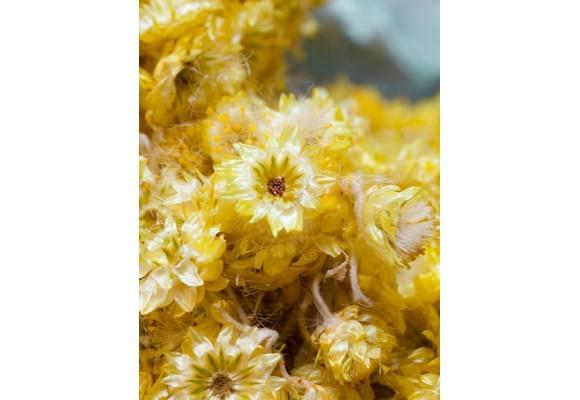 Alergia: las mejores plantas medicinales para combatirla