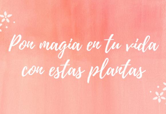 Pon magia en tu vida con estas plantas